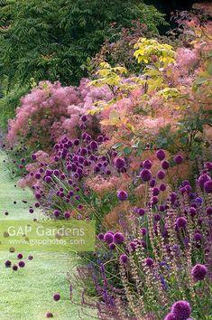 Allium Sphaerocephalon, Prairie Planting, Prairie Garden, Park Landscape, Garden Landscape Design, Smoke Tree, Border Plants, Gras, Plantation