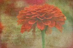 """""""Orange Floral Fantasy"""" artist Kay Novy.  Limited Time Promotion...  http://kay-novy.artistwebsites.com/featured/orange-floral-fantasy-kay-novy.html"""