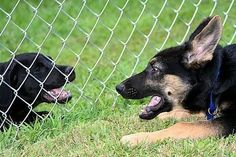 How to Install a Dog Fence http://www.ehow.com/how_4712224_install-dog-fence.html