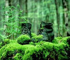 Browse Nature pictures, photos, images, GIFs, and videos on Photobucket Outdoor Life, Outdoor Decor, Outdoor Living, Green Landscape, Jolie Photo, Back To Nature, Nature Pics, Abandoned Places, Shades Of Green