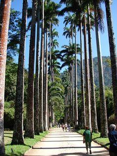 Jardim Botânico - Rio de Janeiro, Brasil. One of the greatest tropical botanical gardens in the world.