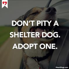 Don't pity a shelter dog. Adopt one. http://iheartdogs.com