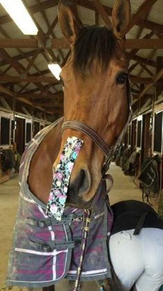 If your horse has a hard time standing still for the farrier, put a piece of duct tape on their nose to distract them. It works!