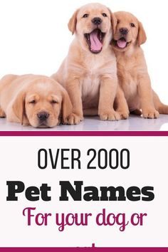 Find your perfect pet name for your dog or cat. Largest database of over 2000 pet names for your new puppy, kitty, dog or cat. Unique names for dogs and cats. Girl Pet Names, Pet Names For Dogs, Good Boy Dog Names, Baby Names, Pet Names Unique, Girl Puppy Names Unique, Creative Dog Names, Cute Pet Names, Pets