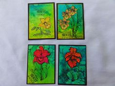 I love flowers and colours too! (by Maria)