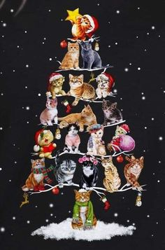 Would make a very cute card Noel Christmas, Christmas Animals, Christmas Cats, Vintage Christmas, Xmas, I Love Cats, Crazy Cats, Cool Cats, Image Chat