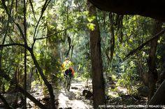Bosque nativo