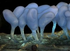 Ninth year, the Olympus BioScapes Digital Imaging Competition, Honorable mention: Young sporangia of slime mold Arcyria stipata, by Dr. Dalibor Matýsek, of the Mining University - Technical University of Ostrava, Ostrava, Czech Republic.
