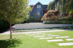Landscape Design Vancouver concrete wall | grasses | maple tree