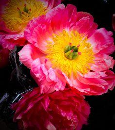 Pink Peonies by Karen Exiner, Exiner Art Studio