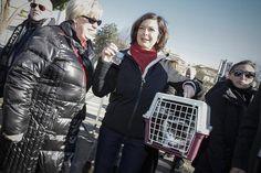 Presidente da Câmara dos Deputados da Itália pede para padre abençoar gato. (foto: ANSA)