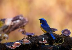 Image Archive, Birdwatching, Nature Images, Happy Weekend, Himalayan, Location History, Nature Photography, Birds, Twitter