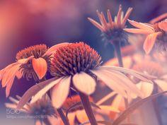 Garden Photography Animals Ideas For 2019 Amazing Gardens, Beautiful Gardens, Fire Pit Patio, Modern Planters, Diy Solar, Garden Boxes, Glass Garden, Animal Photography, Portrait Photography