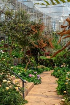 Garden Images, Garden Pictures, Perennial Ground Cover, Concrete Staircase, Gardening Photography, Nature Photography, Plant Lighting, Chinese Garden, Garden Planters