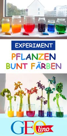 Experiment: Coloring plants Green is boring? Color your plants bun . - Experiment: Coloring plants Green is boring? Color your plants colorful! How this works is of cours - Plant Experiments, Science Experiments For Preschoolers, Science For Kids, Science Daily, Kindergarten Architecture, Growing Greens, Diy Crafts To Do, Easy Crafts, Mothers Day Crafts For Kids