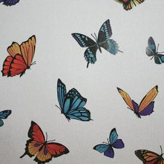Butterfly Wallpaper - Designer Wall Coverings by Graham  Brown