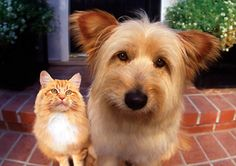 Did you now if you are with Progressive or Auto-Owners, and your pets are in car accident with you , they are covered!
