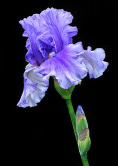 Richly Purple Photograph