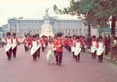 Regimental Goat, Ceremonial Pioneers and Band of The Royal Welch Fusiliers London Public Duties.