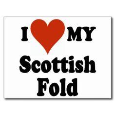 I Love My Scottish Fold Cat Merchandise Postcard
