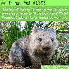Job openings in Australia - WTF fun facts - I seriously want this job!!!  xxxxx❤
