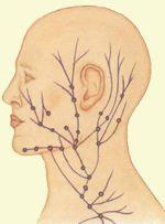 схема капилляров