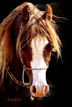 For the Love of Horses Beautiful Arabian Horses, Most Beautiful Horses, Majestic Horse, All The Pretty Horses, Beautiful Creatures, Animals Beautiful, Cute Animals, Arabian Stallions, Andalusian Horse