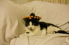 Wear this sombrero, they said. Size doesn't matter, they said.