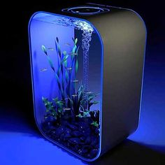 What a great desk aquarium!  Love the sleek, modern design!  #CoolTechGadgets #PhotoOfTheDayMay