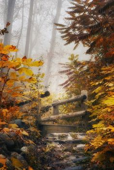 Misty Footbridge by Scott Norris on - a ravine trail in Lake Park, Milwaukee, Wisconsin. Autumn Scenes, Fall Season, Belle Photo, Autumn Leaves, Mother Nature, Thing 1, Seasons, Photography, Milwaukee Wisconsin
