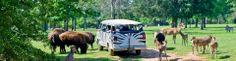 Cherokee Trace Drive-Thru Safari in Jacksonville, TX