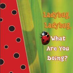 ladybug ladybug what are you doing
