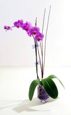 orchids!#Repin By:Pinterest++ for iPad#