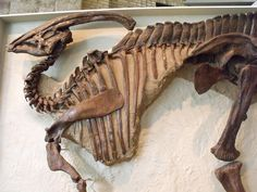 Another Hadrosaur   Flickr - Photo Sharing!