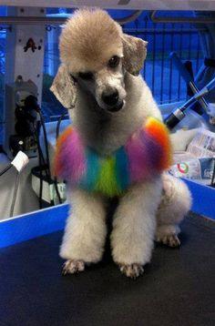 Creative grooming done by Tury Tseytlin with OPAWZ pet hair dye