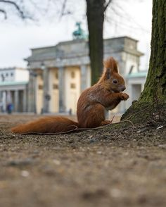 « Breakfast - last pic of my squirrel 3/3  Berlin
