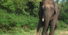 Como fazer uma tromba de elefante com copos de papel