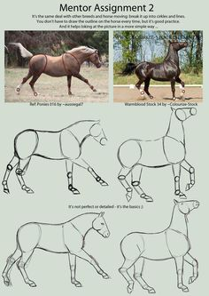 How to draw a horse: - # drawings - Drawings/Cartoons/Disney/Pixar/Idk - Zeichnen Horse Drawings, Art Drawings Sketches, Animal Drawings, Drawing Animals, Drawing Techniques, Drawing Tips, Horse Drawing Tutorial, Arte Equina, Horse Anatomy