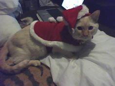 "Santa Claws say ""You on naughteh list""."