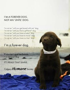 """Forever dog....so true. I hate people that get rid of dogs bc where they're moving """"doesn't allow dogs"""" ....shouldn't you have asked that BEFORE signing the lease??"""