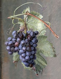 Grapes Painting - California Vineyard Art #Wine #California #Grapes