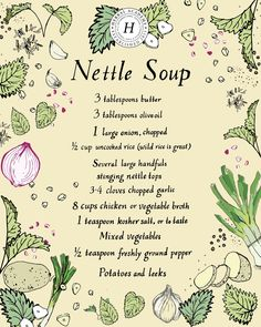 12 Nettle Recipes To Add To Your Cookbook | Herbal Academy | Stinging Nettles can be harvested, dried and incorporated into your diet year round for nourishment – add these delicious nettle recipes to your cookbook!