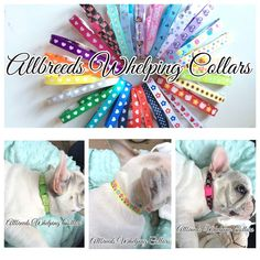 Allbreeds #puppy i.d whelping collars #adjustable, dog #breeding whelping kit set,  View more on the LINK: http://www.zeppy.io/product/gb/2/302091483424/