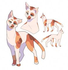 go warrior cats Warrior Cats Series, Warrior Cats Fan Art, Cute Animal Drawings, Animal Sketches, Cat Oc, Warrior Cat Drawings, Cat Character, Mythical Creatures Art, Furry Drawing