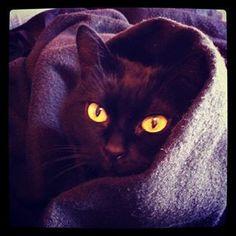 Virginie All  Ma #PerleNoire Kittie