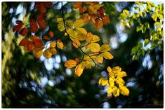swirl of autumn with petzval lomography Autumn, Explore, Plants, Fall Color Schemes, Fall Season, Fall, Plant, Planets, Exploring