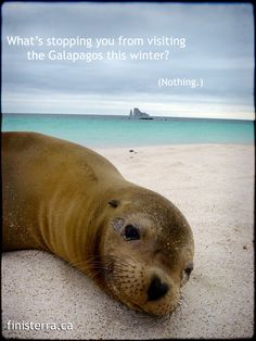 What's stopping you from visiting the Galapagos Islands this winter?   www.finisterra.ca   #travel #galapagos