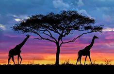 Tanzanie 6