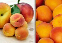 Βερίκοκα και τα οφέλη στην υγεία μας (αναιμία, καρκίνος, αδυνάτισμα κ.α.) Health Diet, Mango, Peach, Fruit, Food, Manga, Peaches, Eten, Meals