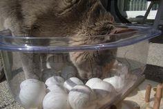 Katzenfummelbrett -